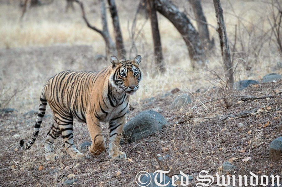 Tiger Photography Tours 2